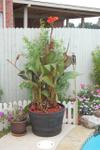 Garden_plant_2